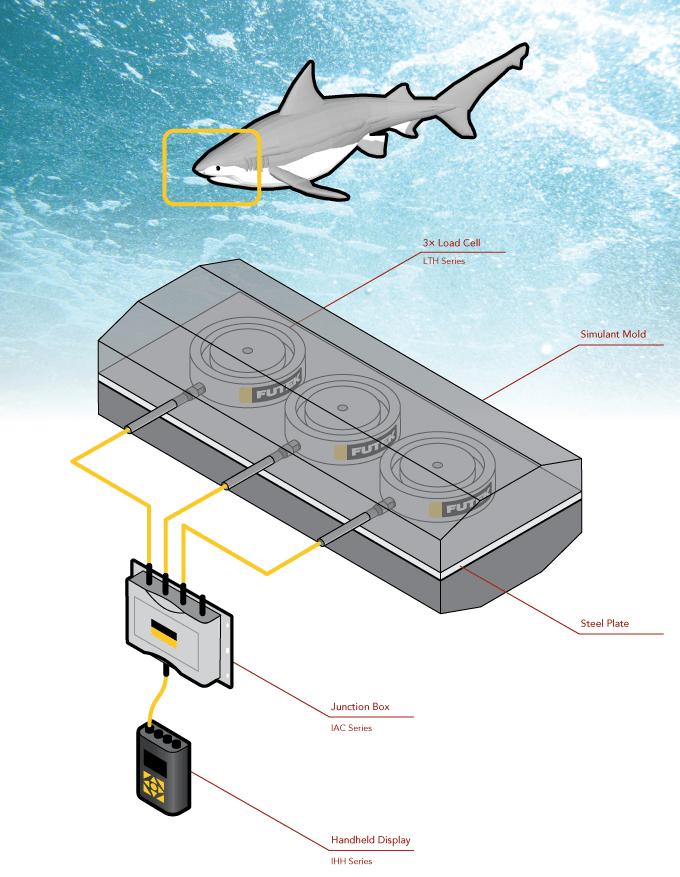 Shark Bite Force Measurement